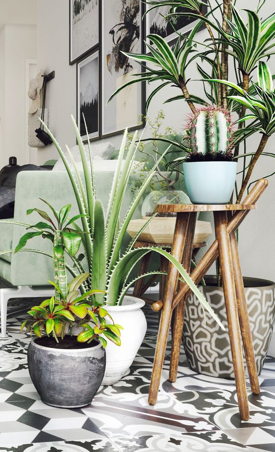 plante-sunroom