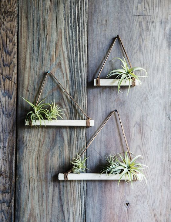 plantele-de-aer-un-nou-trend-in-designul-de-interior-11