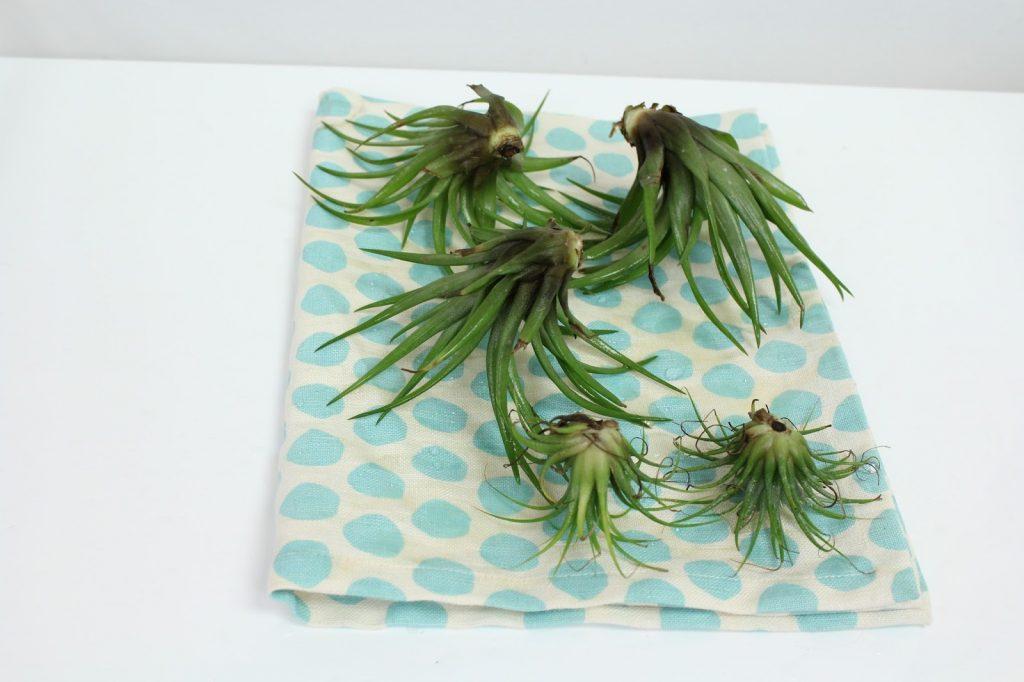 plantele-de-aer-un-nou-trend-in-designul-de-interior-7