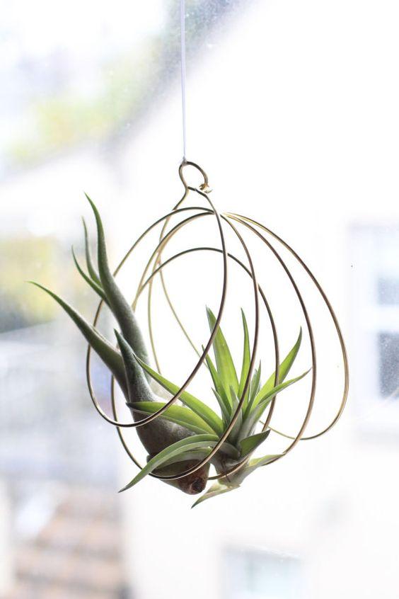 plantele-de-aer-un-nou-trend-in-designul-de-interior-8